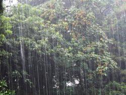 ゴルフ場の雨の状況