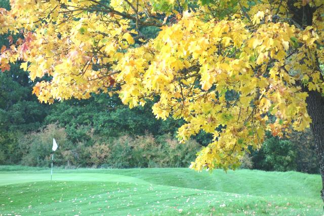 秋のゴルフの魅力が分かる画像